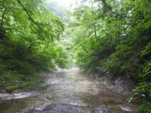 恵みの森滝上の森